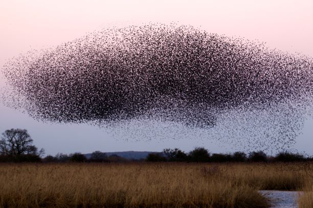 Locust swarm Photo by James Wainscoat on Unsplash