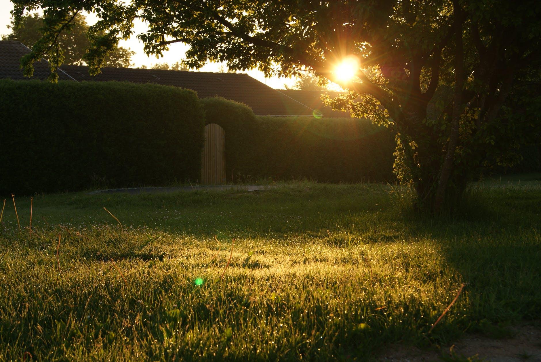 garden sunset sunrise lens flare